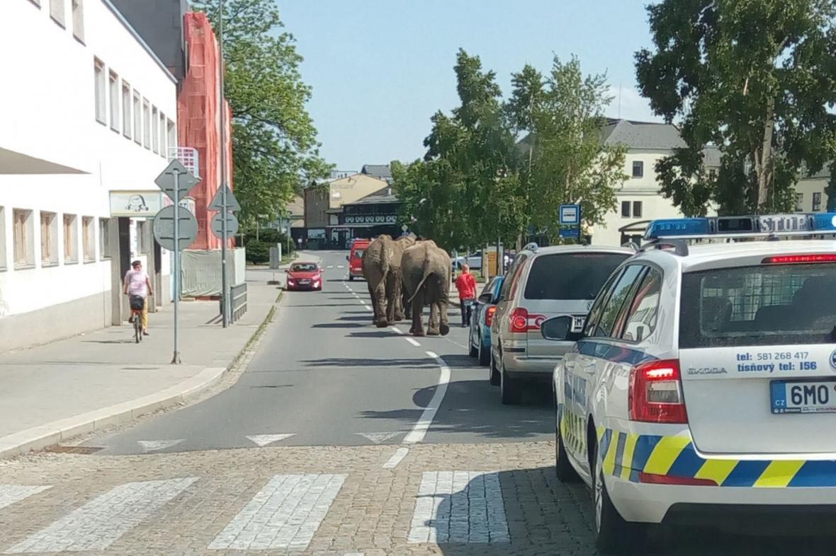 Sloni pochodují Přerovem
