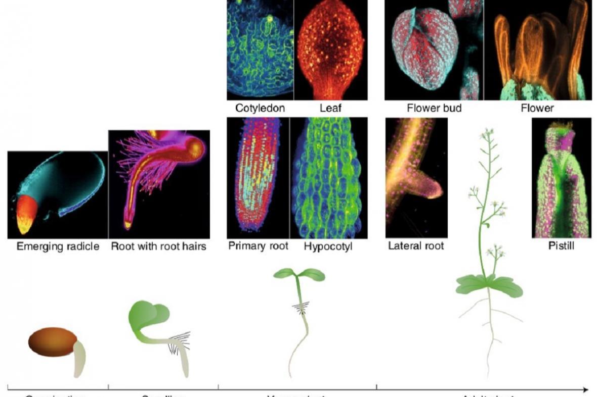 Nová metoda zobrazování rostlin