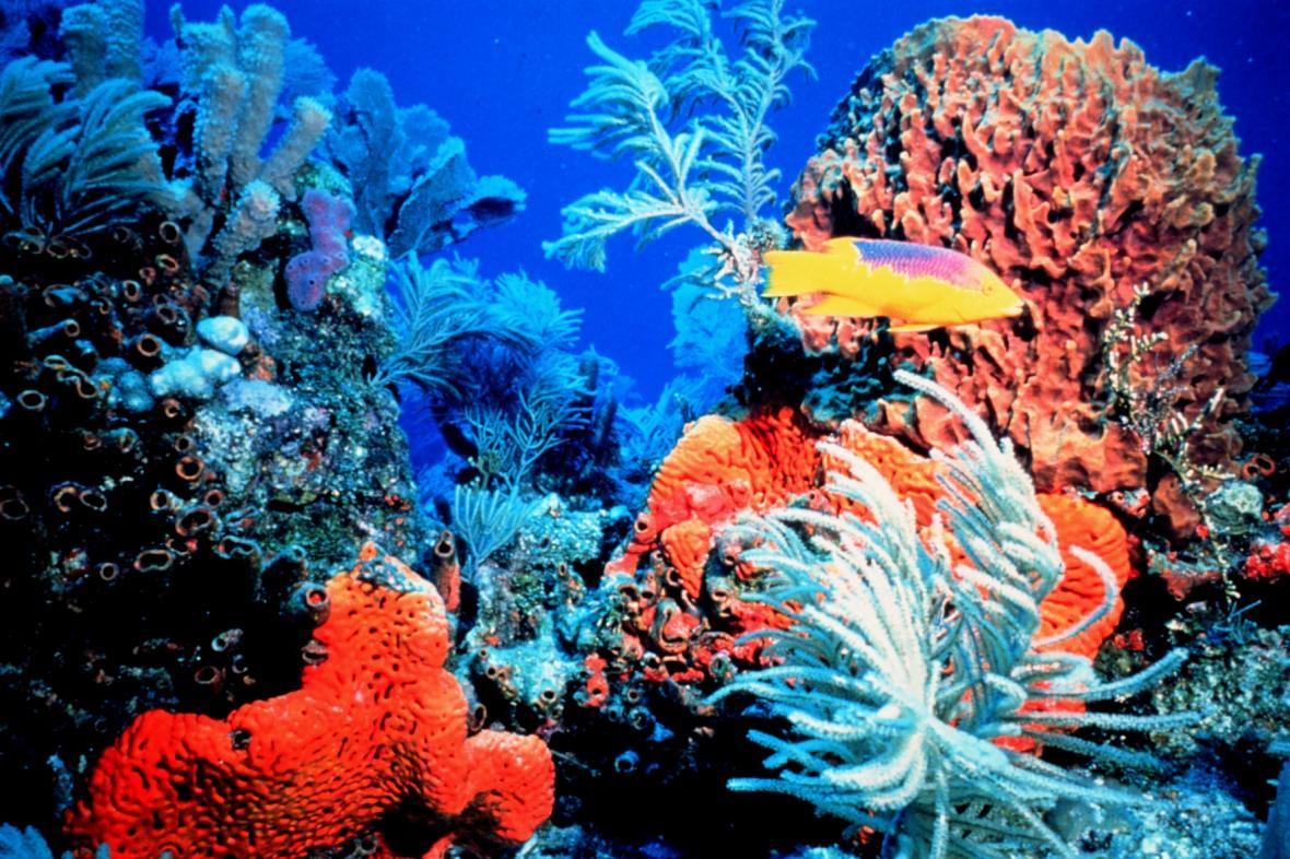 Floridský korálový útes
