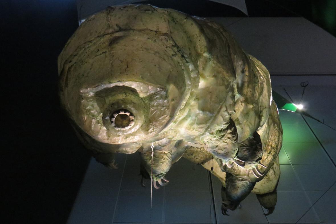 Model želvušky