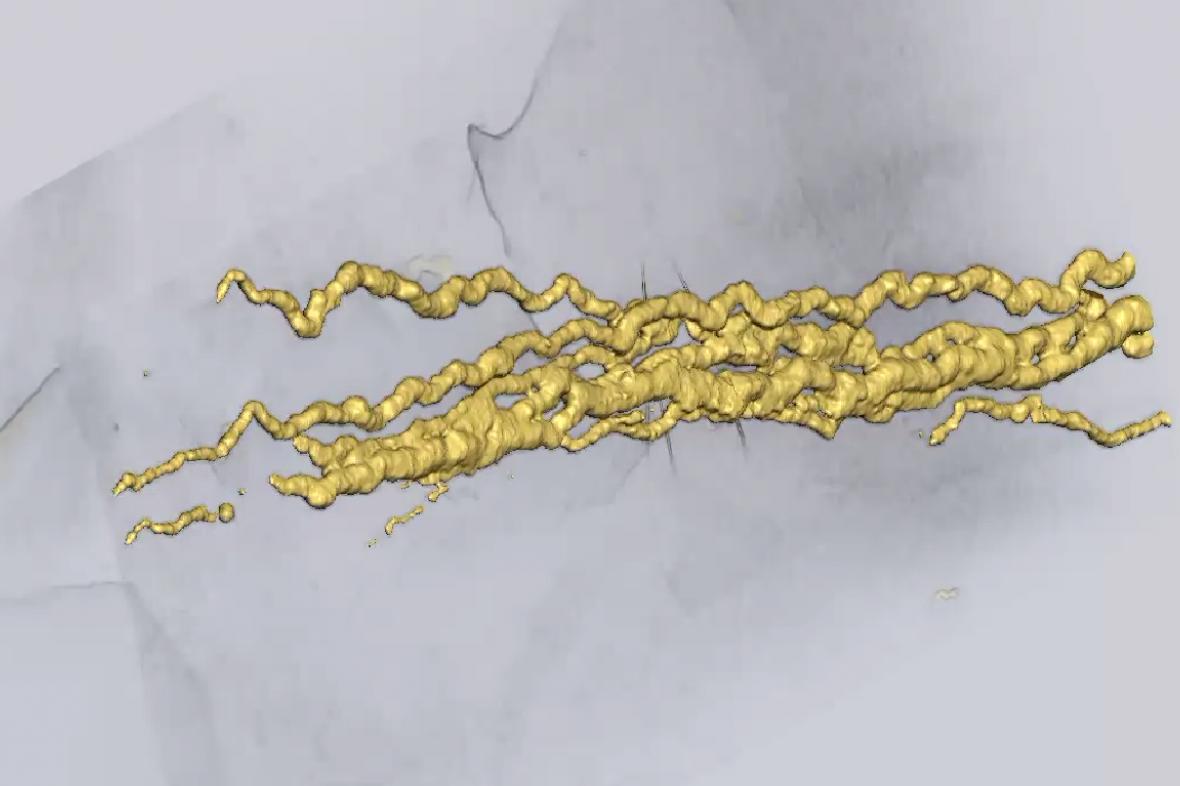 Stopy staré 2,1 miliard let