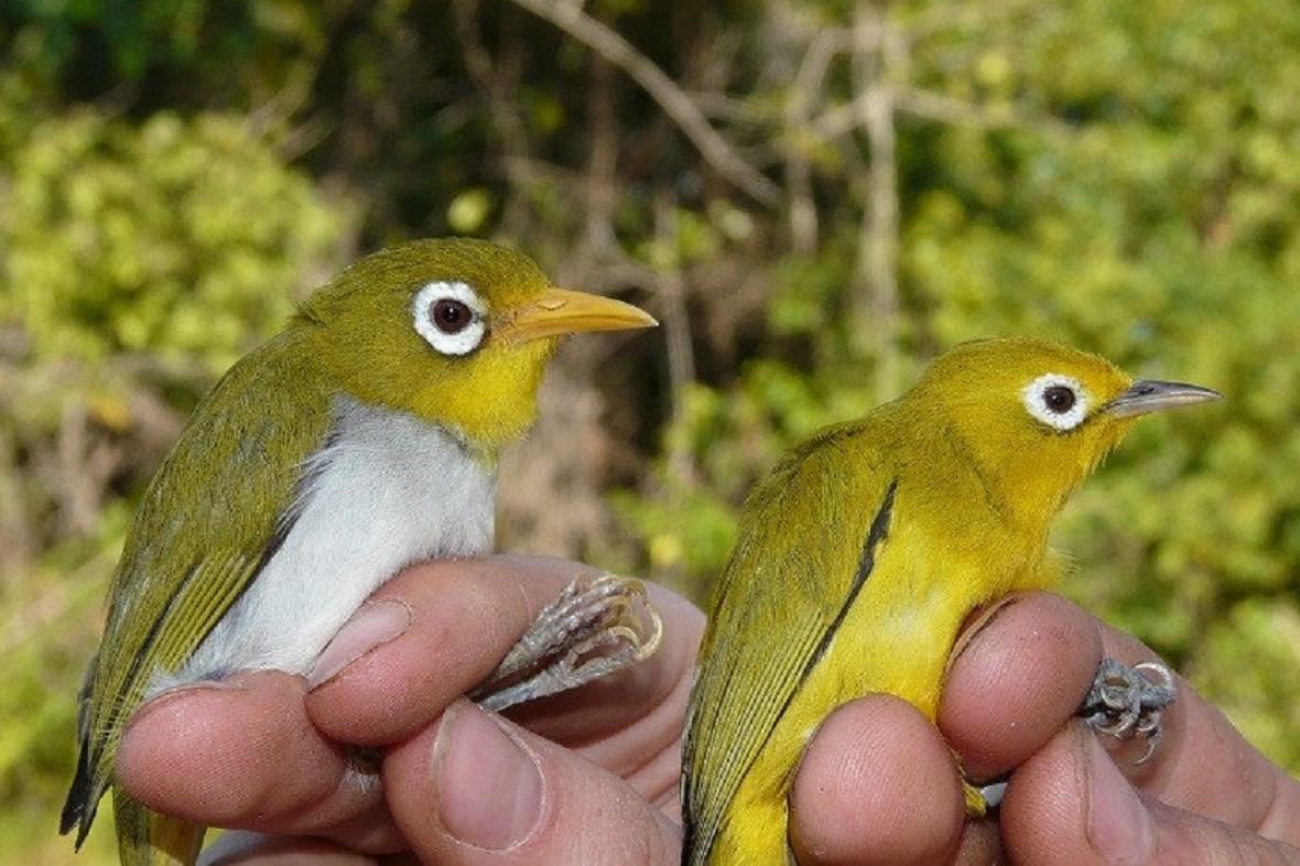 Dva druhy nově objevených ptáků