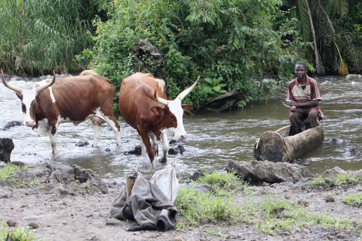 Pastevec v Kongu