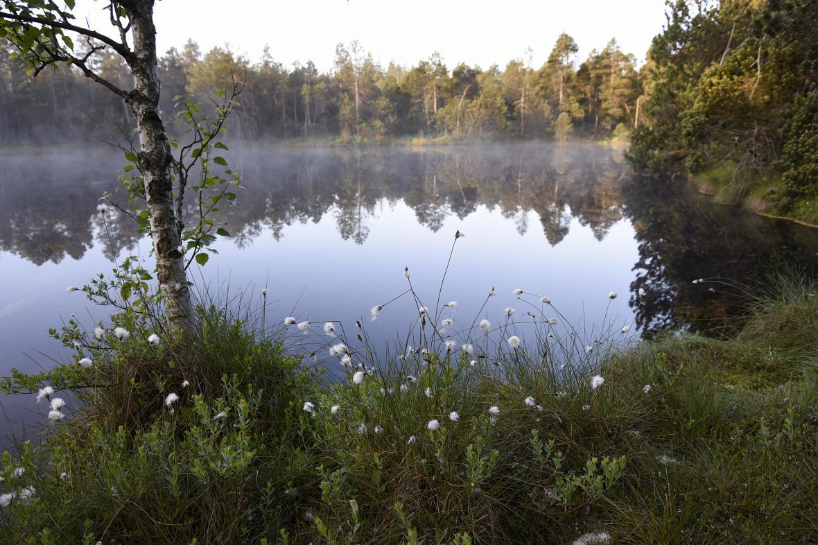 Přírodní rezervace Rejvíz v Jeseníkách