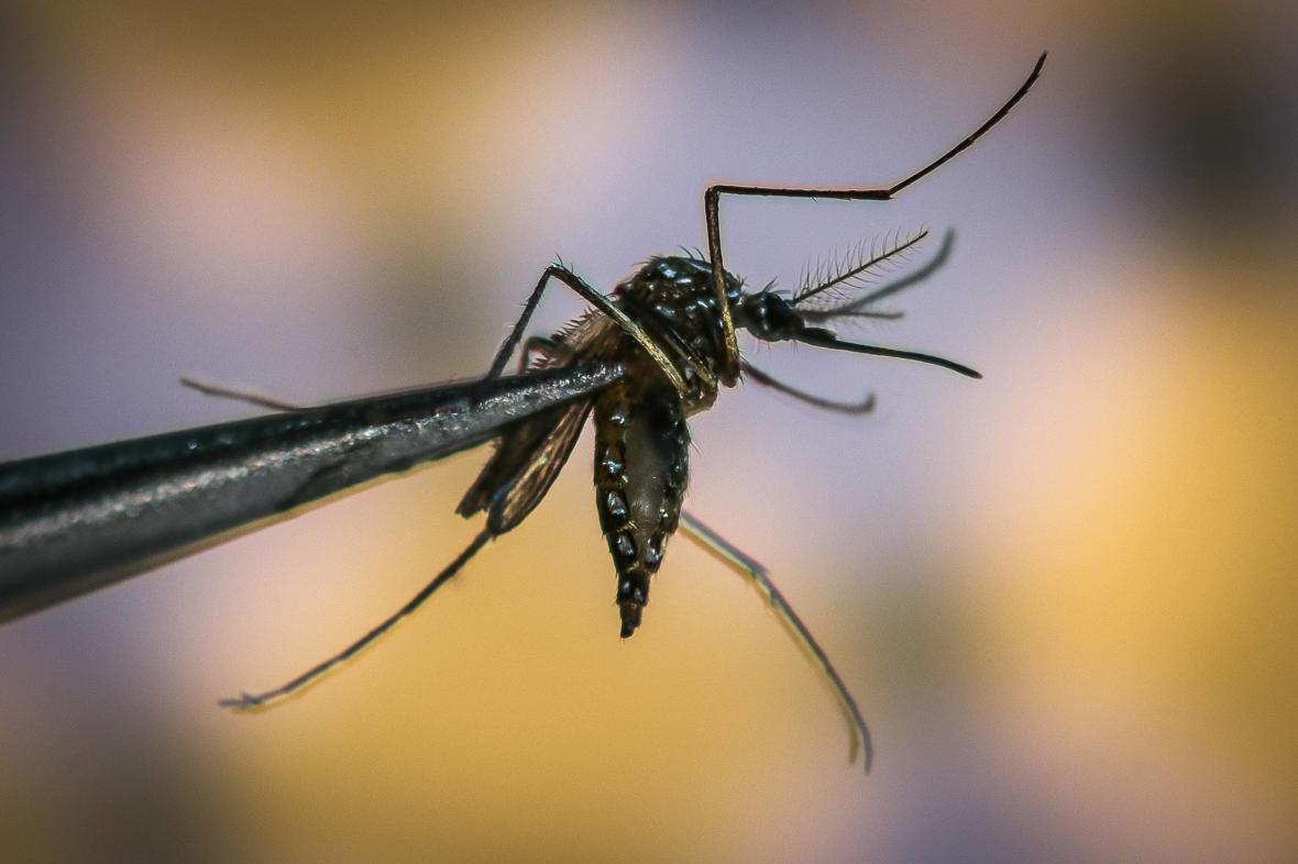 Světový den komárů