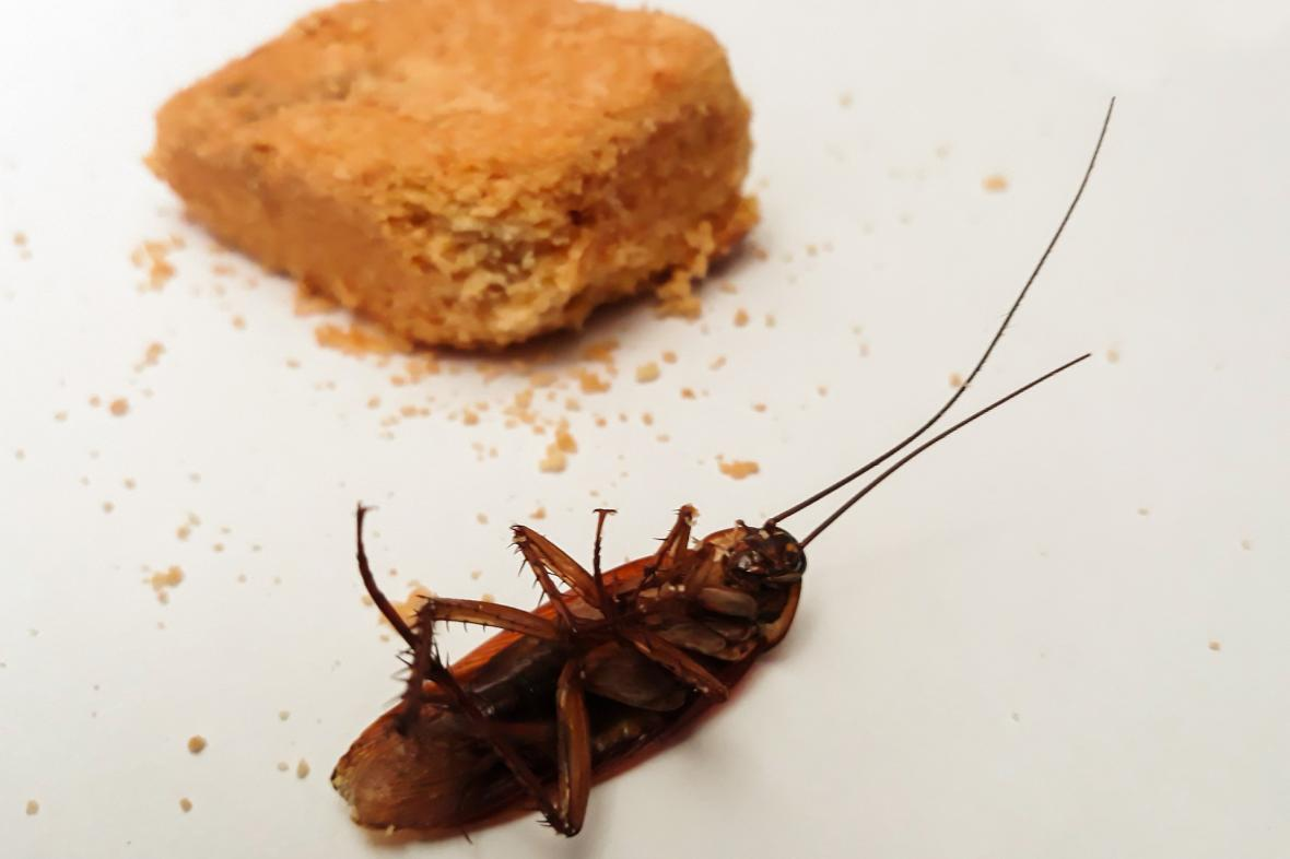 Mrtvý šváb