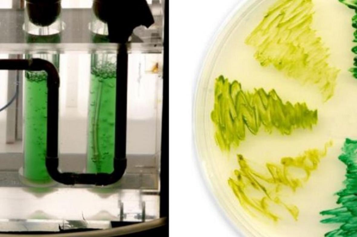 Výzkum fotosyntézy, ilustrační foto