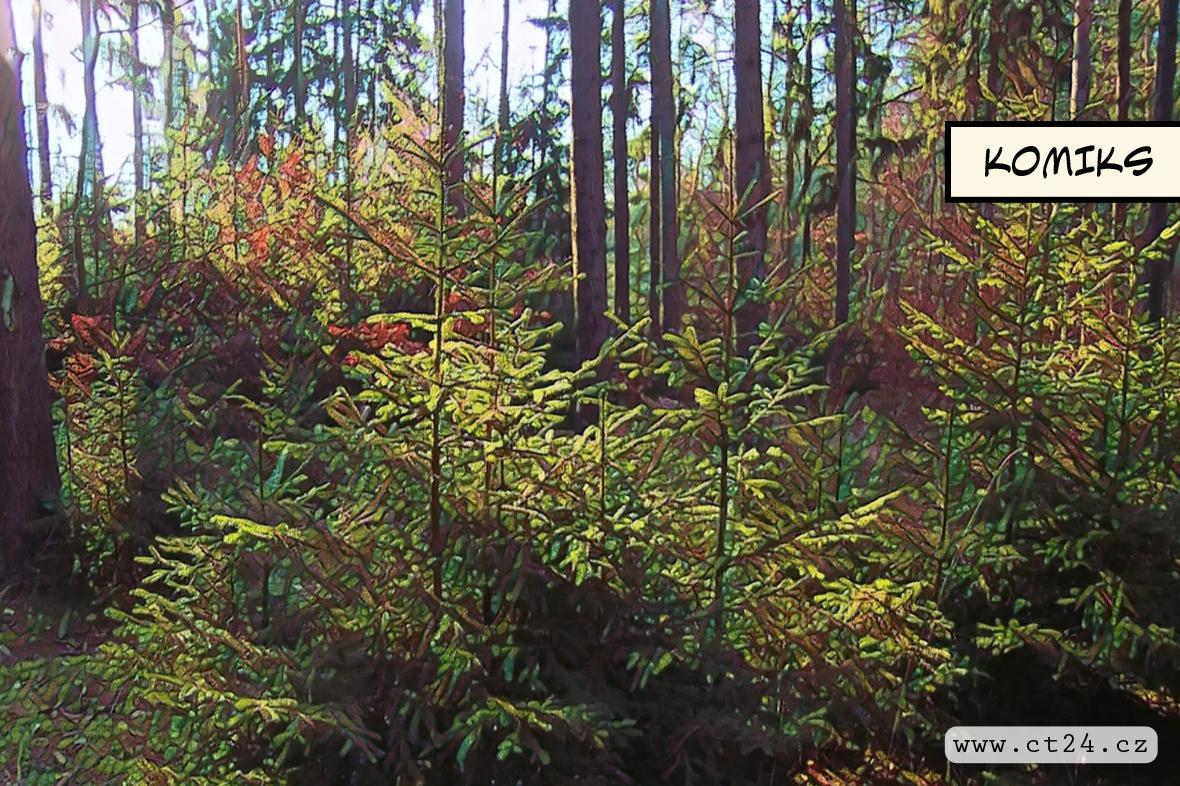 Kůrovcová kalamita postupuje lesy napříč republikou. Z Moravy se naplno přesunula na Vysočinu a do Čech