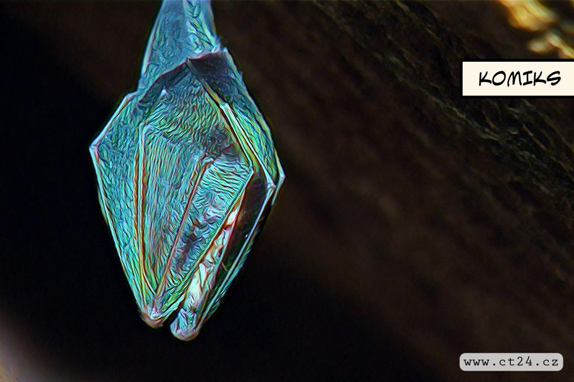 Zoologové zaznamenali rekordní počet netopýrů