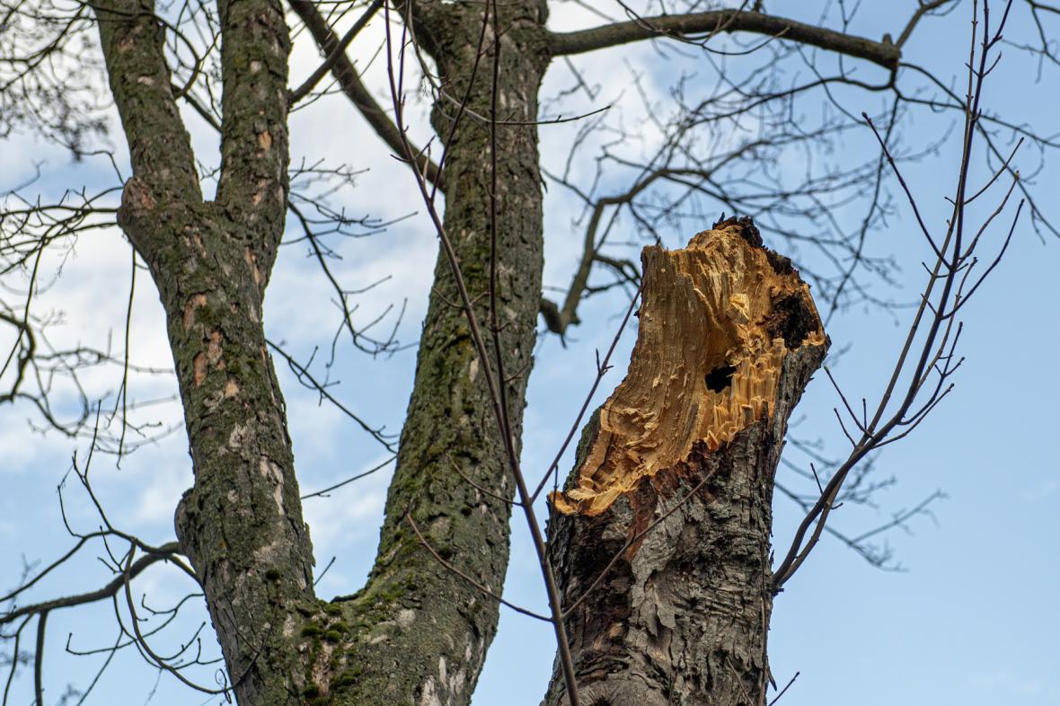 Zlomený strom
