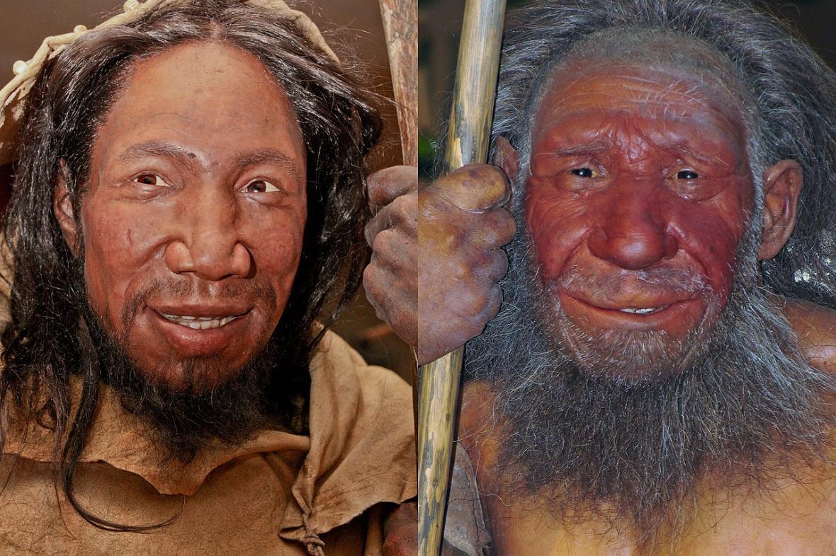 Srovnání podoby Homo sapiens (vlevo) a Homo neanderthalensis (vpravo)