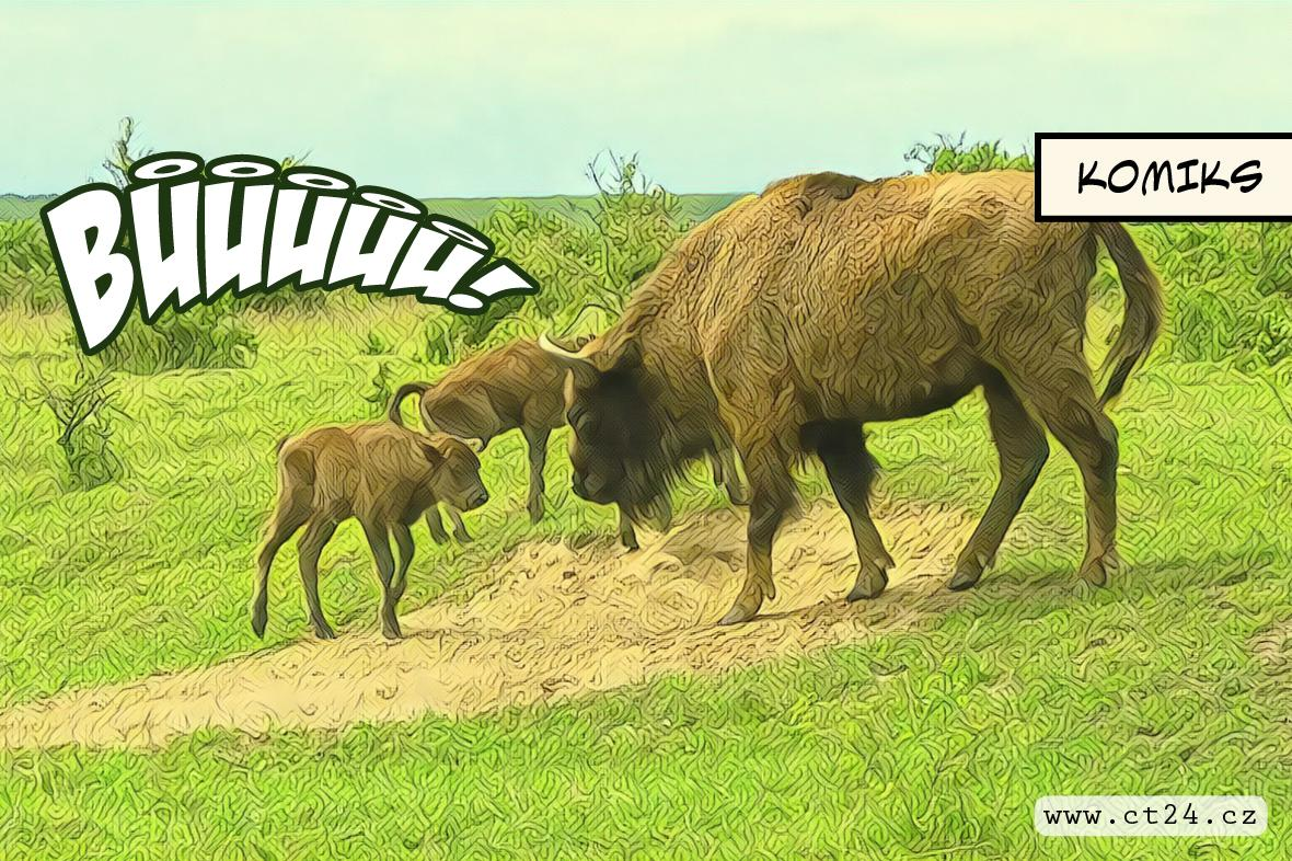 Kúra divokými zvířaty přírodě svědčí