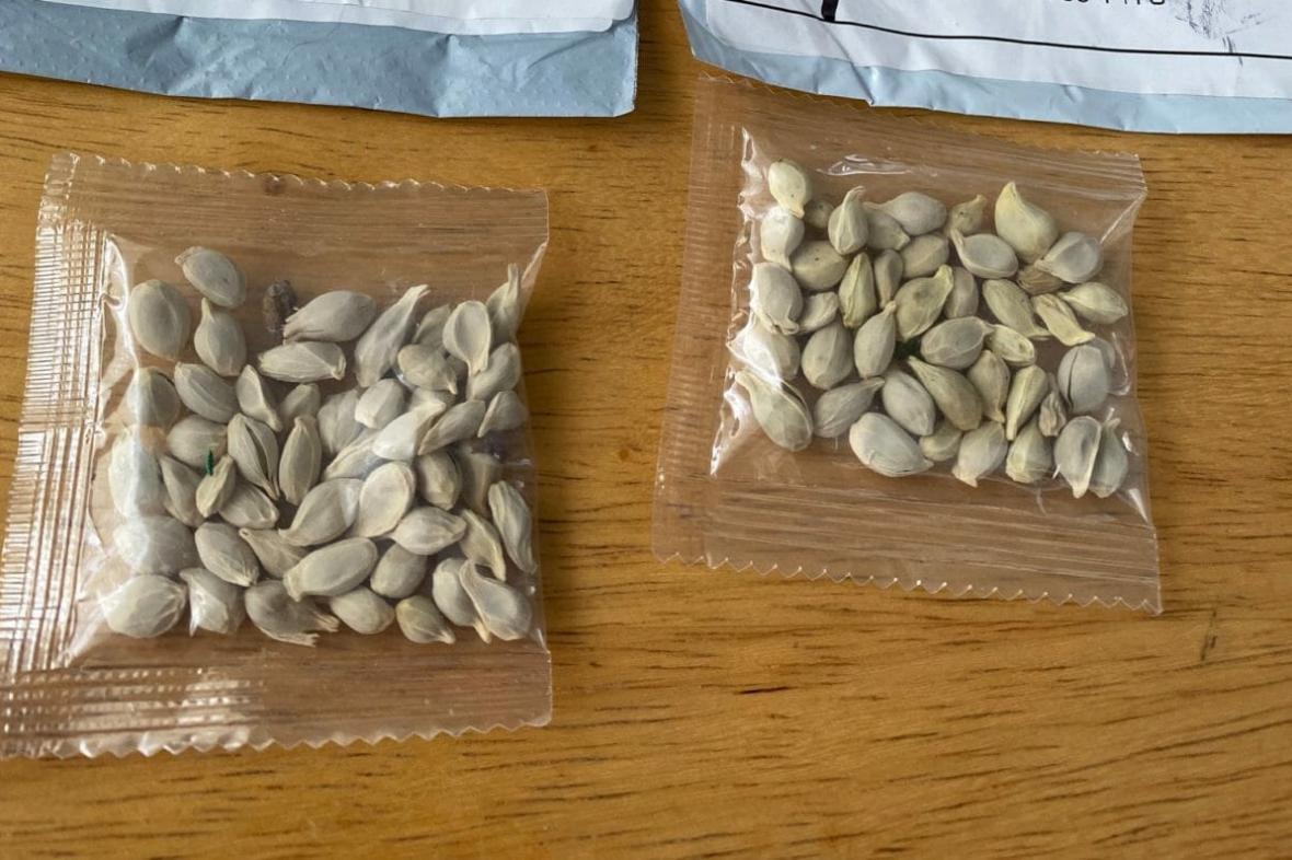 Nelegální čínská semena v amerických schránkách