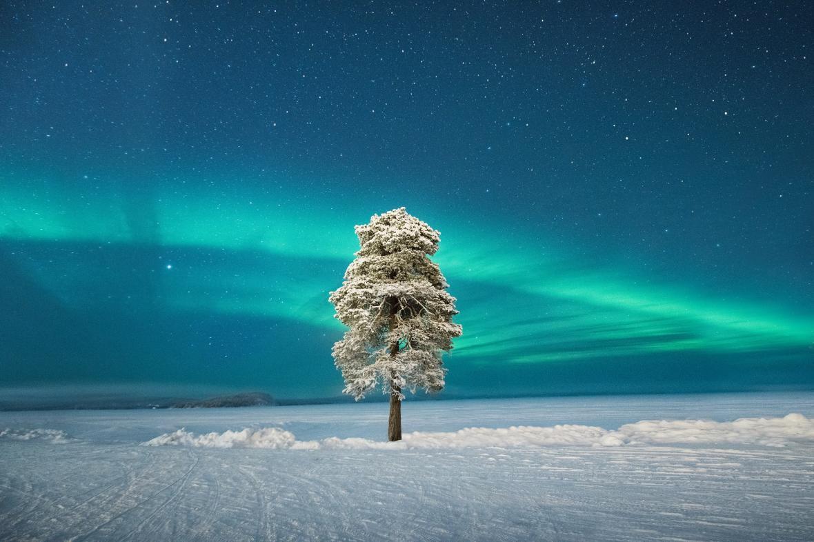 Lone Tree under a Scandinavian Aurora © Tom Archer
