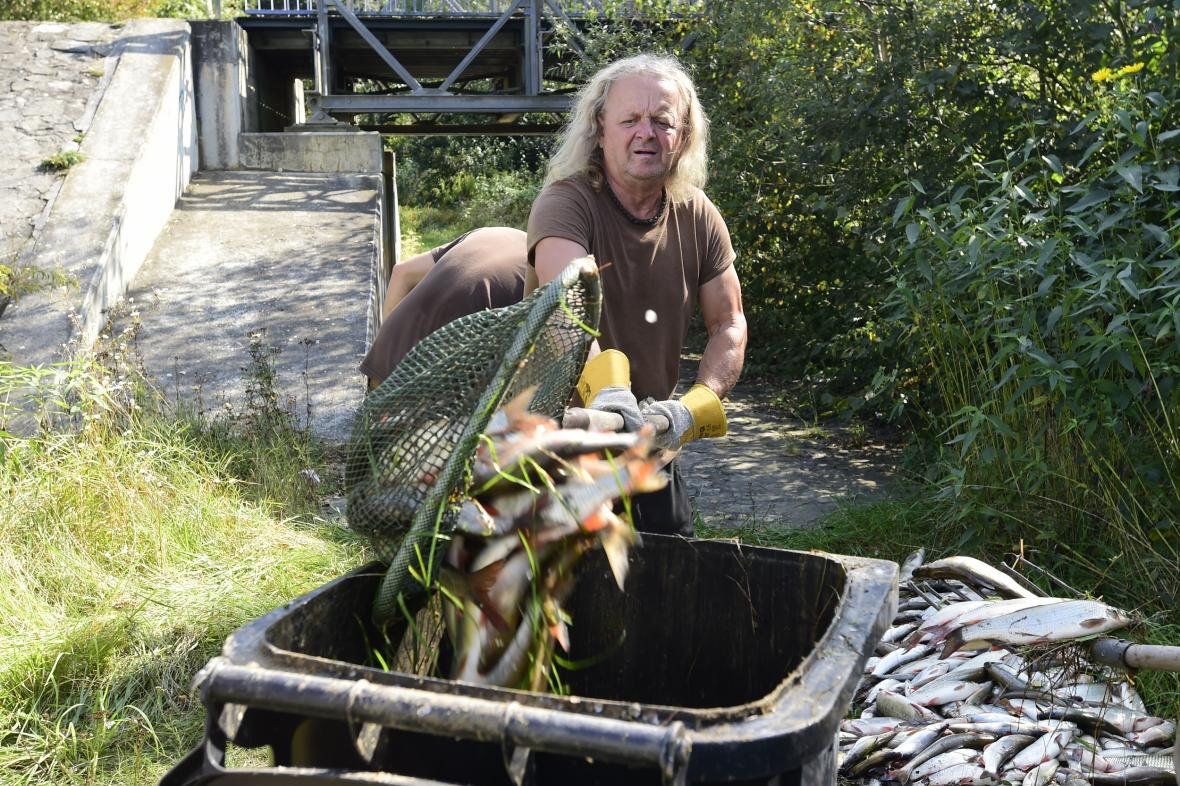 Úhyn ryb v Bečvě