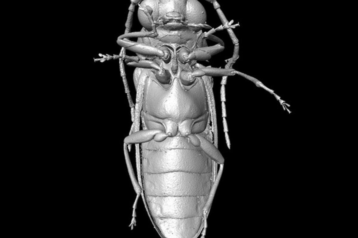 Mikro-CT rekonstrukce druhu Mysteriomorphus pelevini