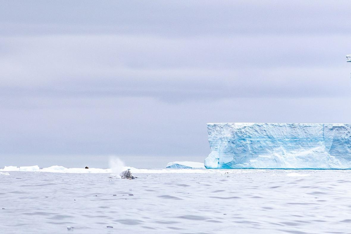 Ledovec A-68