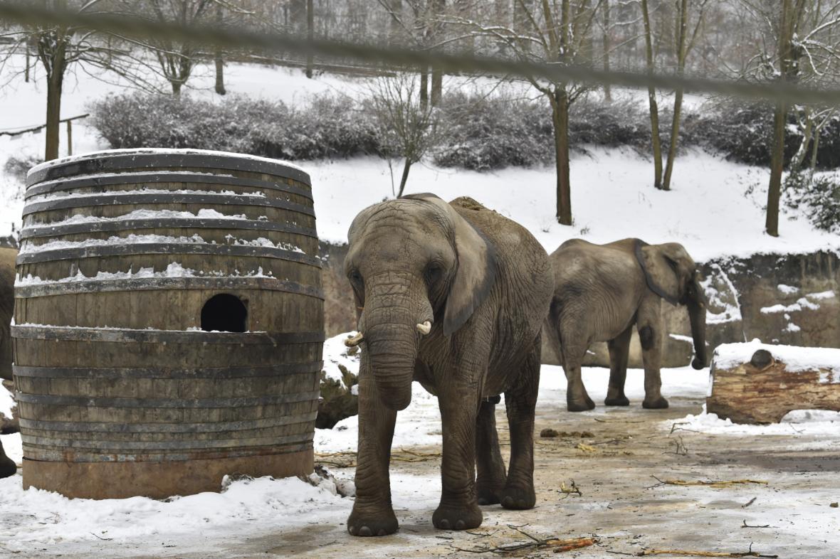 Sloni ve zlínské zoo
