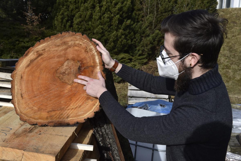 Výzkum stromů ve městě