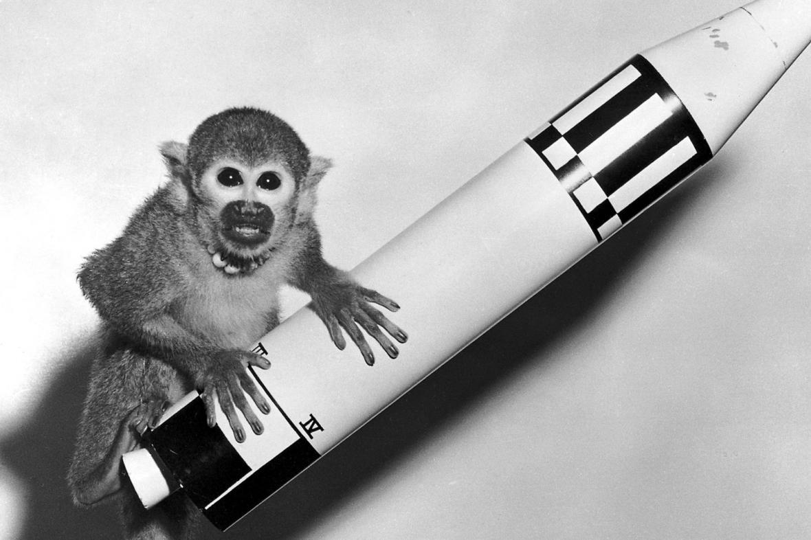 Opice Baker použitá při suborbitální letu rakety Jupiter