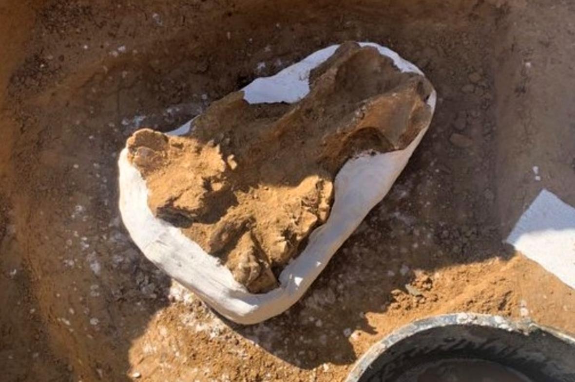 Část nalezené lebky nosorožce srstnatého