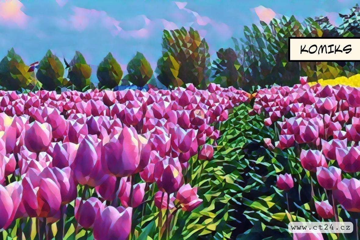 Roste zájem o květiny. Lidé se více věnují jejich pěstování