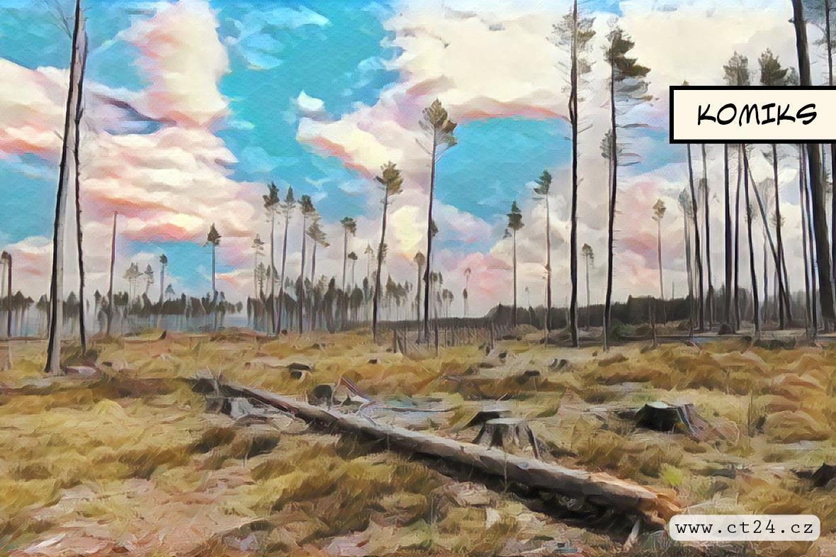Lesníci loni zasadili 200 milionů stromů