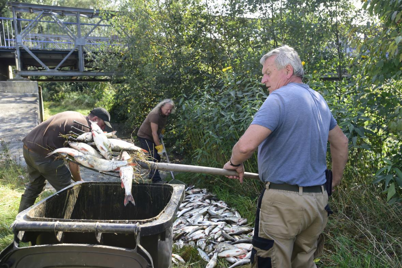 Rybáři likvidují mrtvé ryby (21. 9. 2020)