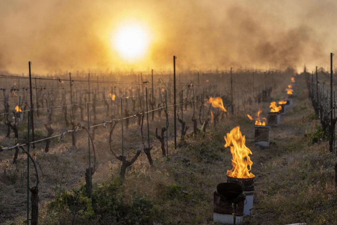 V dubnu 2021 museli ve Francii zahřívat vinohrady