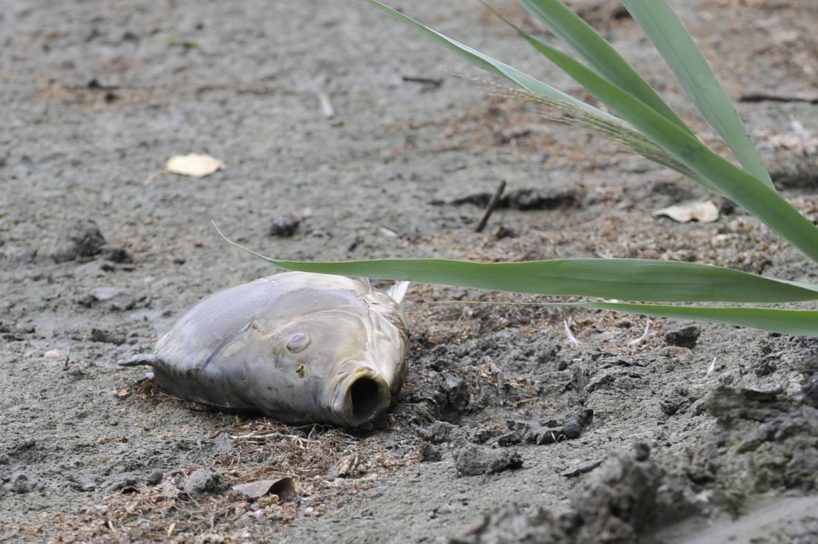 Ilustrační fotografie: Uhynulá ryba