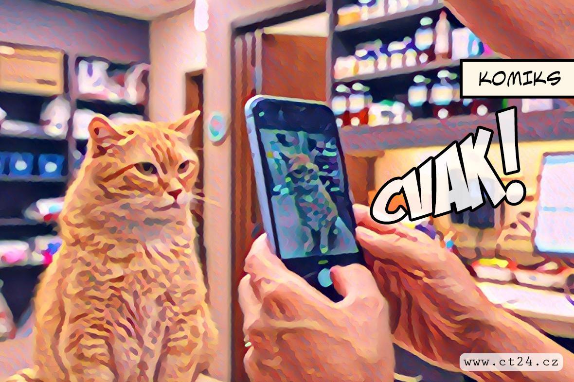 Nová aplikace rozpozná kočičí emoce. Dělá to přes snímky obličeje
