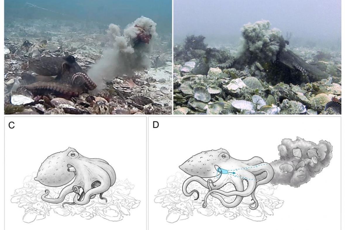 Jak chobotnice vrhají předměty a bahnem