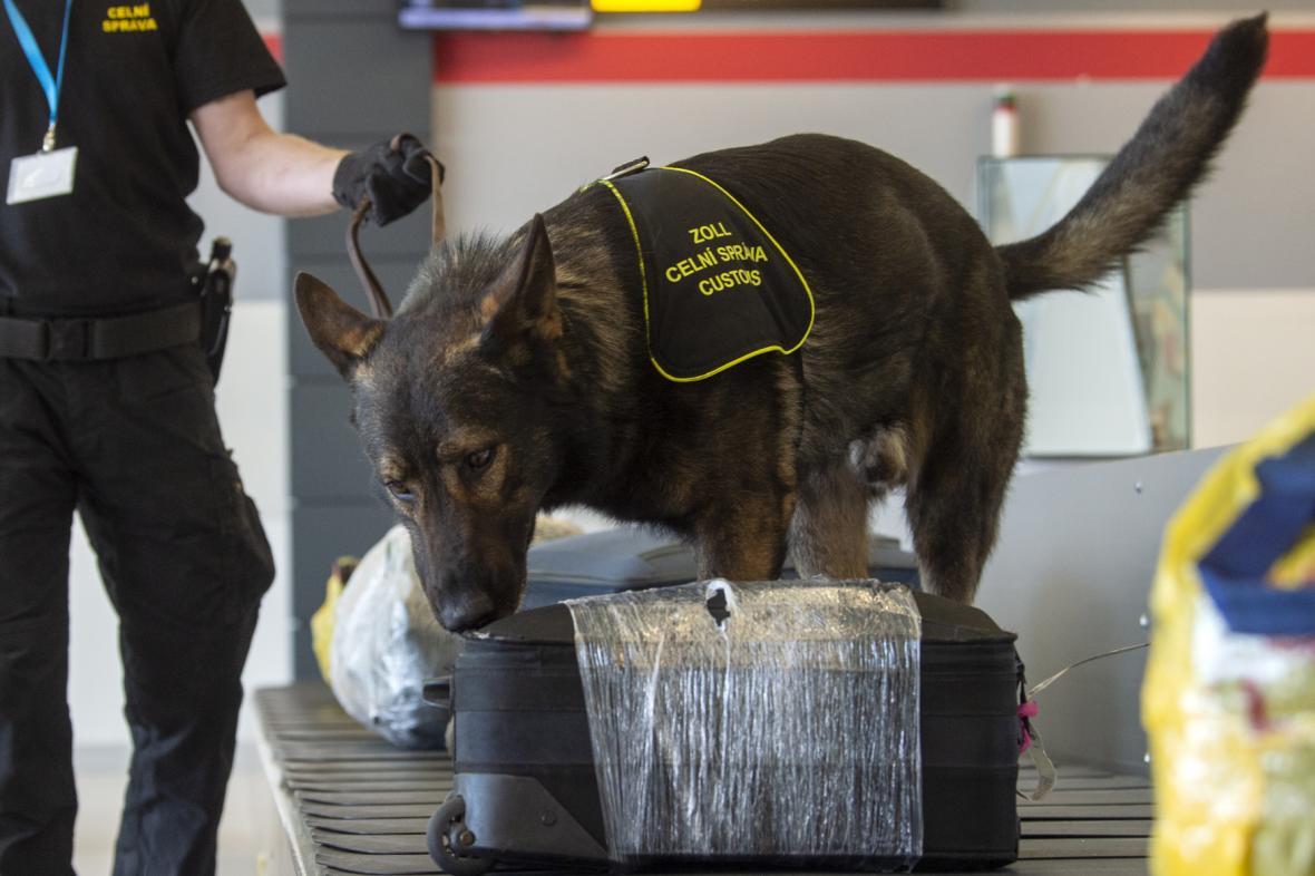 Celní kontrola zavazadel