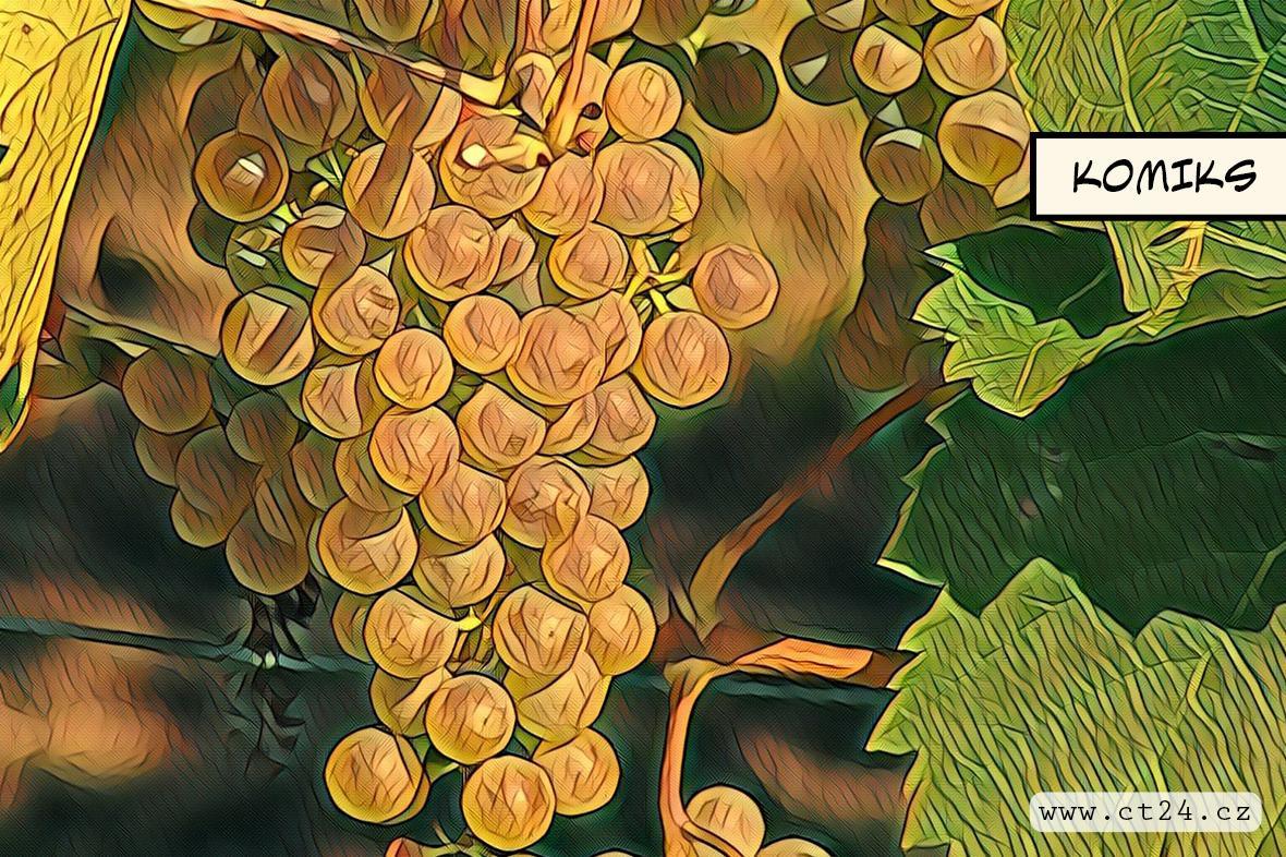 Stoupá zájem o odolnější odrůdy brambor a vína. Pěstování se má obejít bez zbytečné chemie