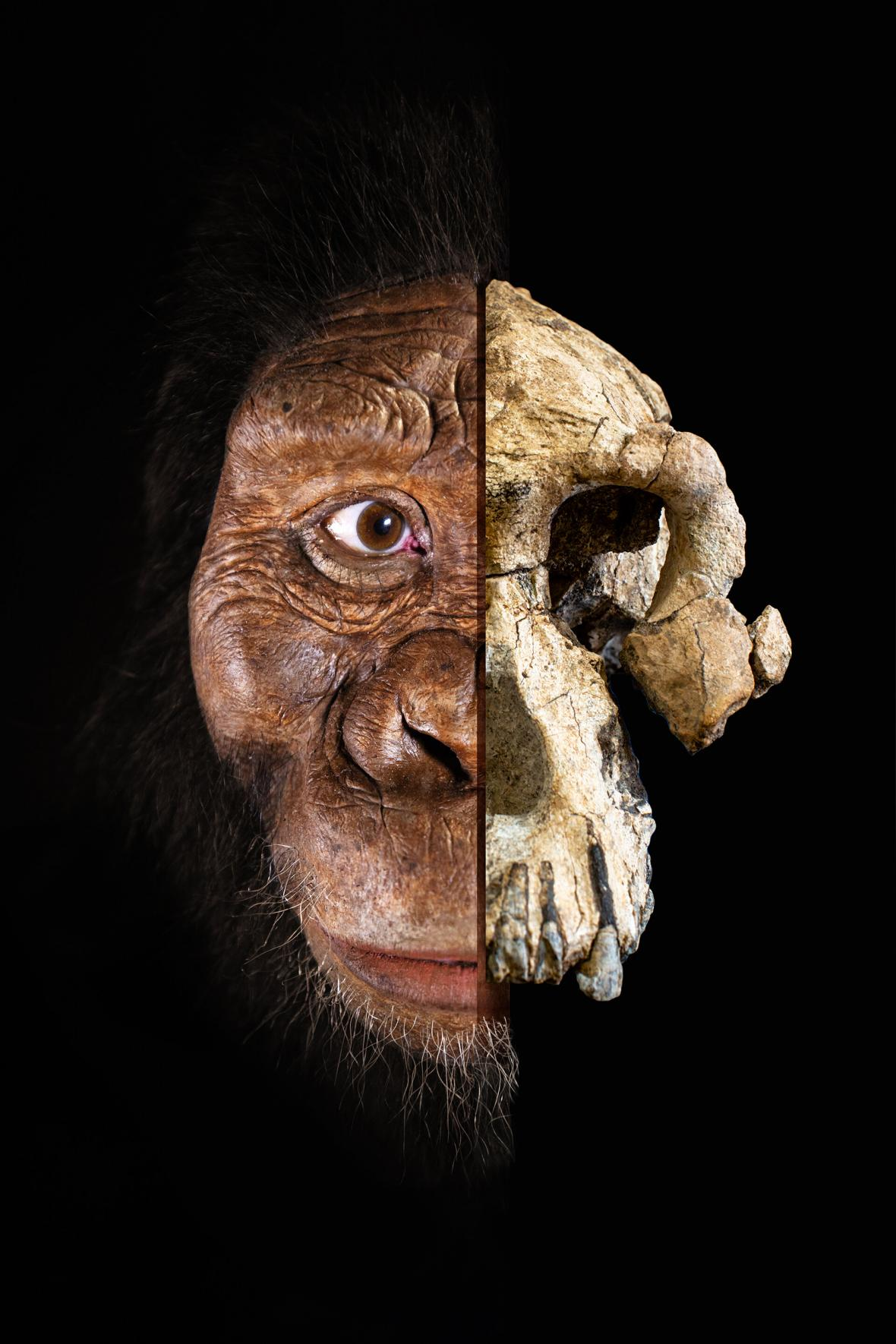 Tvář australopitheka MRD-VP-1/1