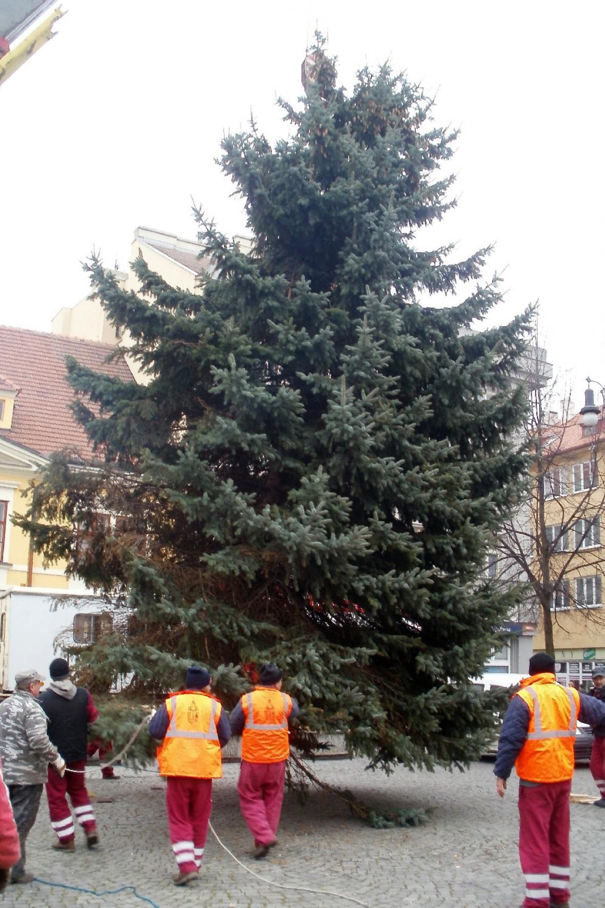 Vánoční strom v Lounech