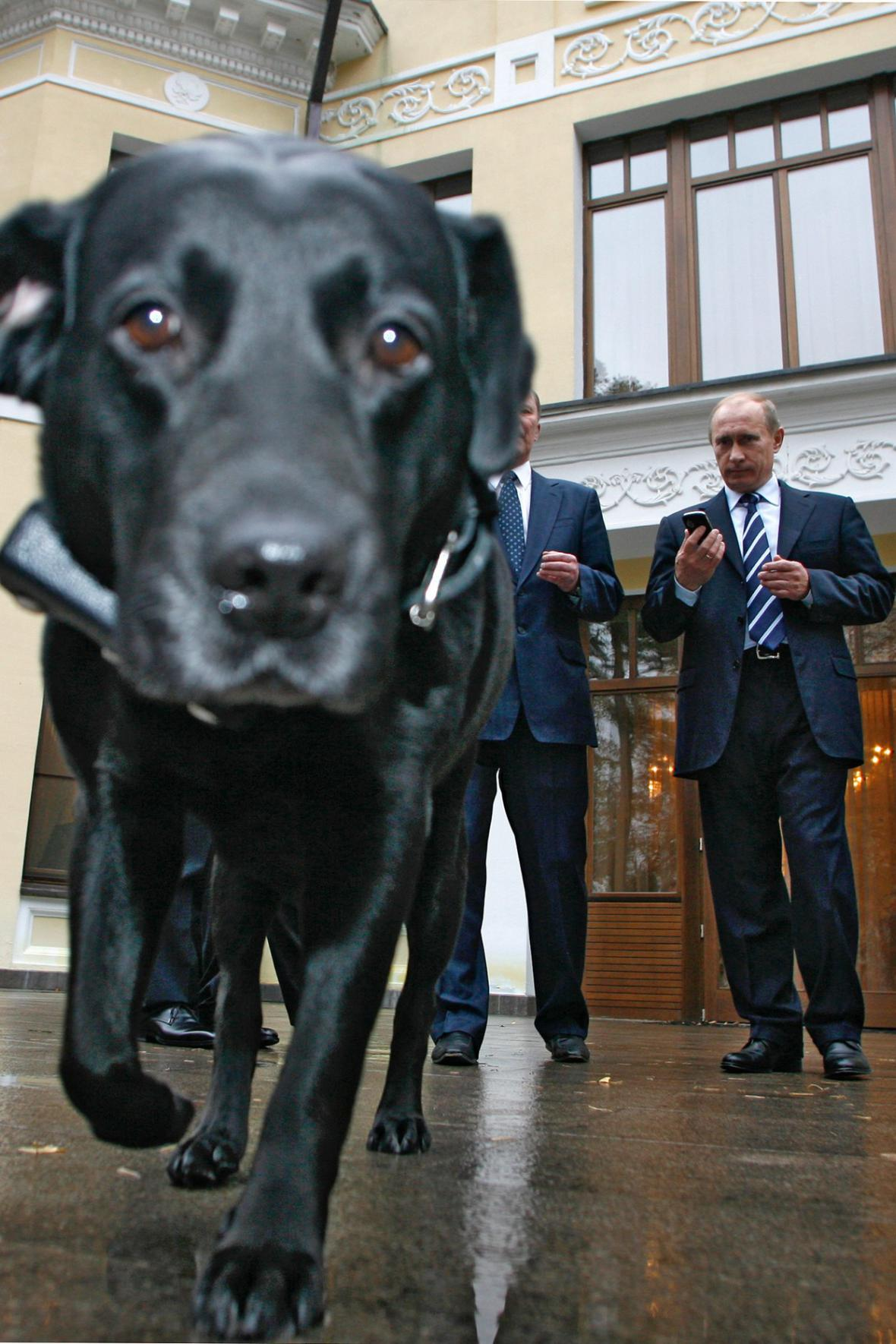 Putinova labradorka Kony s ruským GPS