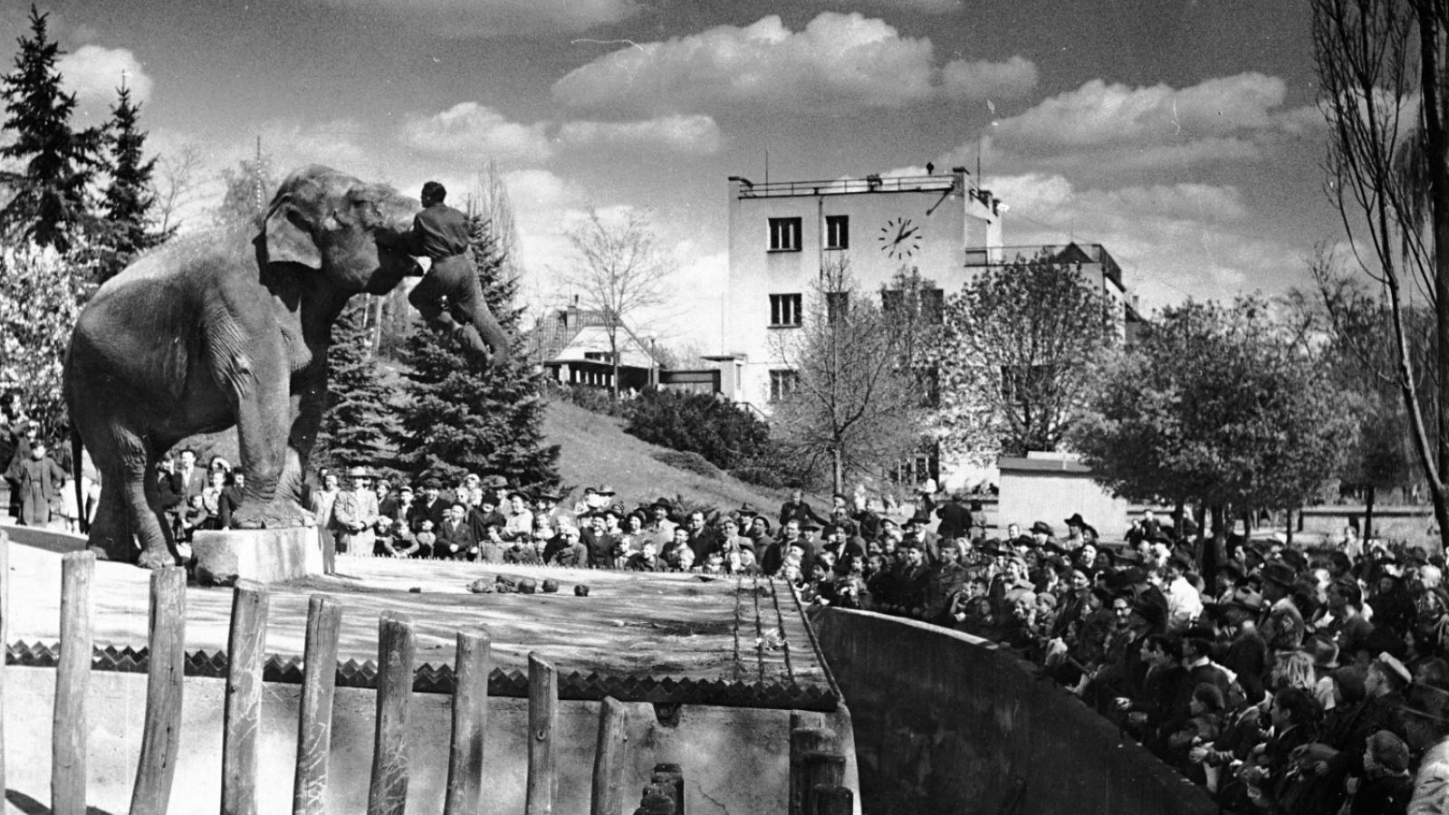 V rámci jubilejní oslavy proběhne i vernisáž výstavy Neznámá zoo. Na snímku slon cejlonský