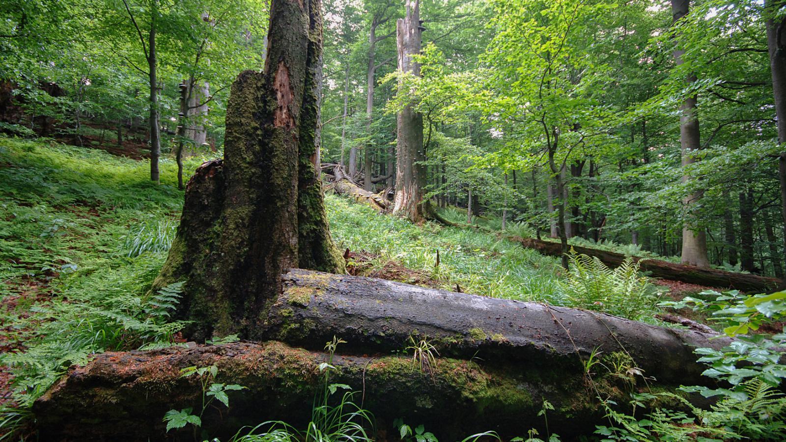 Beskydský prales Mionší