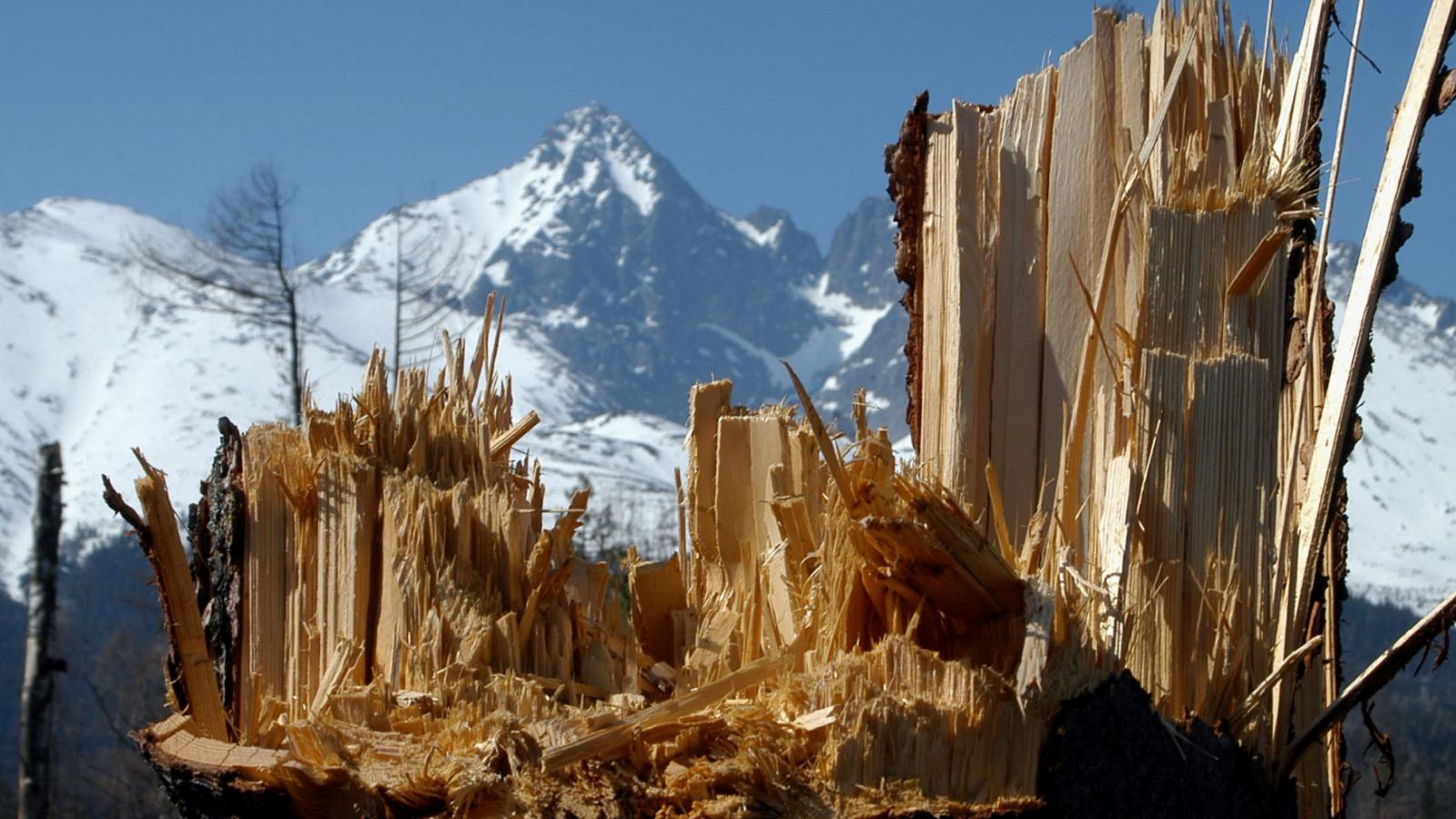 Tatry po ničivé vichřici v roce 2004