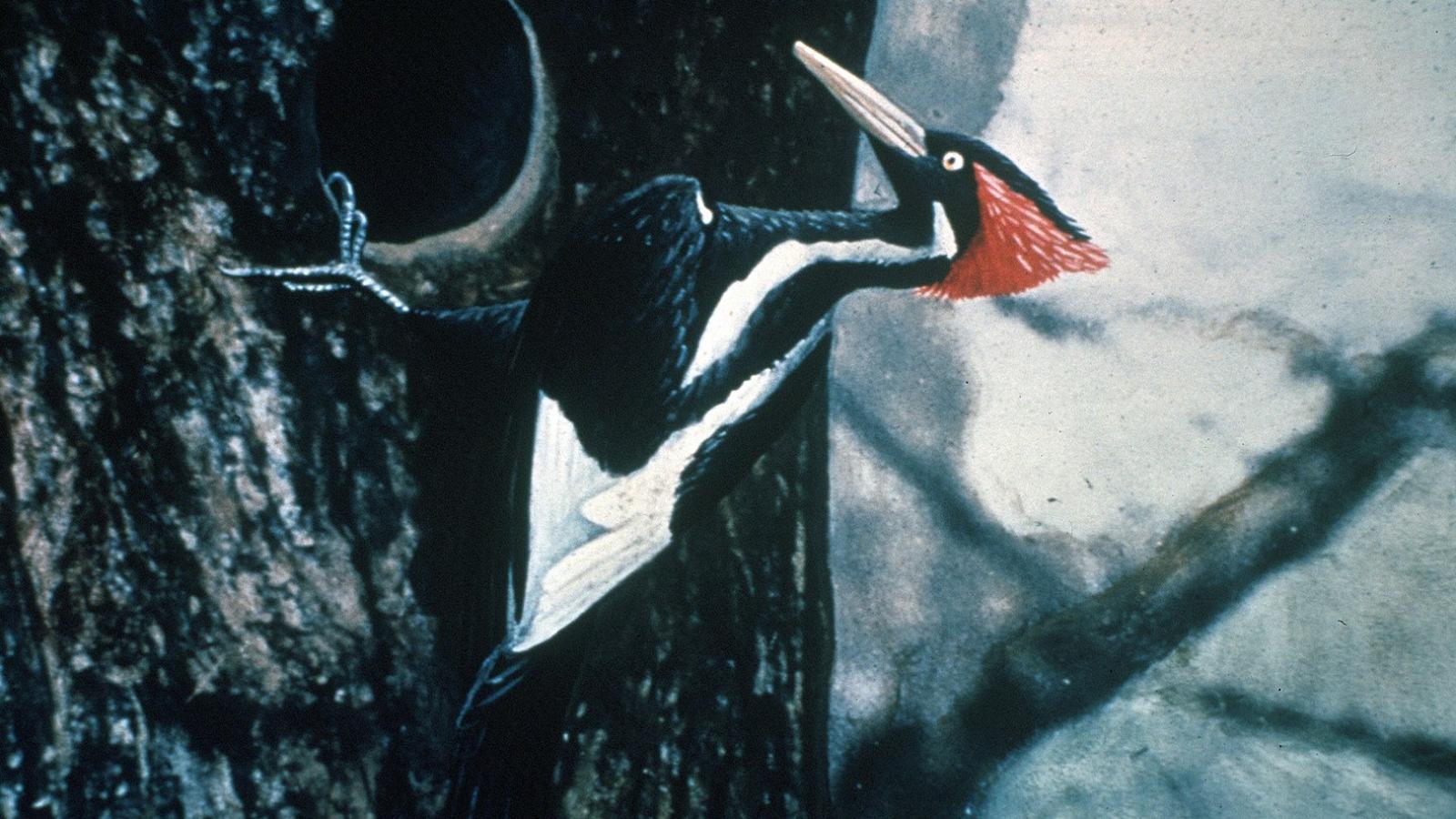 Vymřelé druhy amerických ptáků