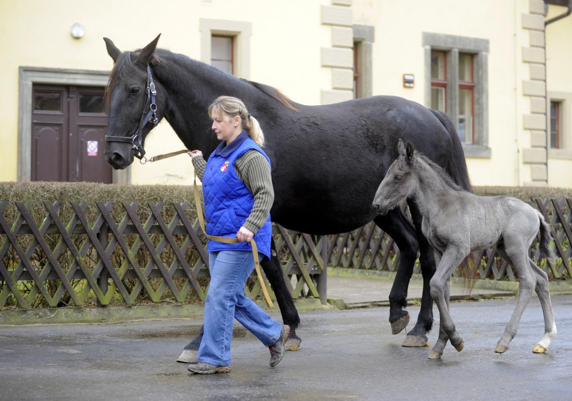 Matka a hříbě starokladrubského koně - únor 2015
