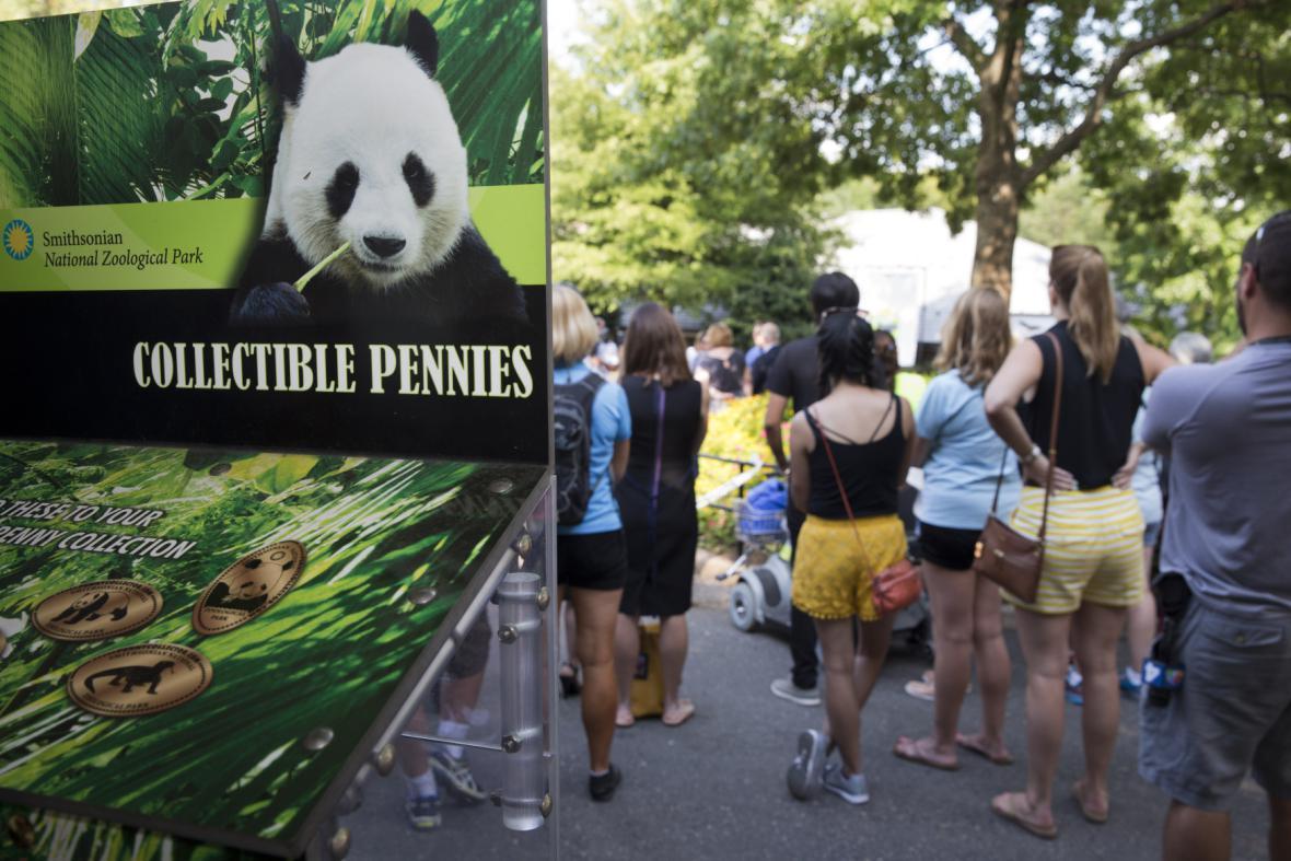 Jedno z pandích mláďat uhynulo