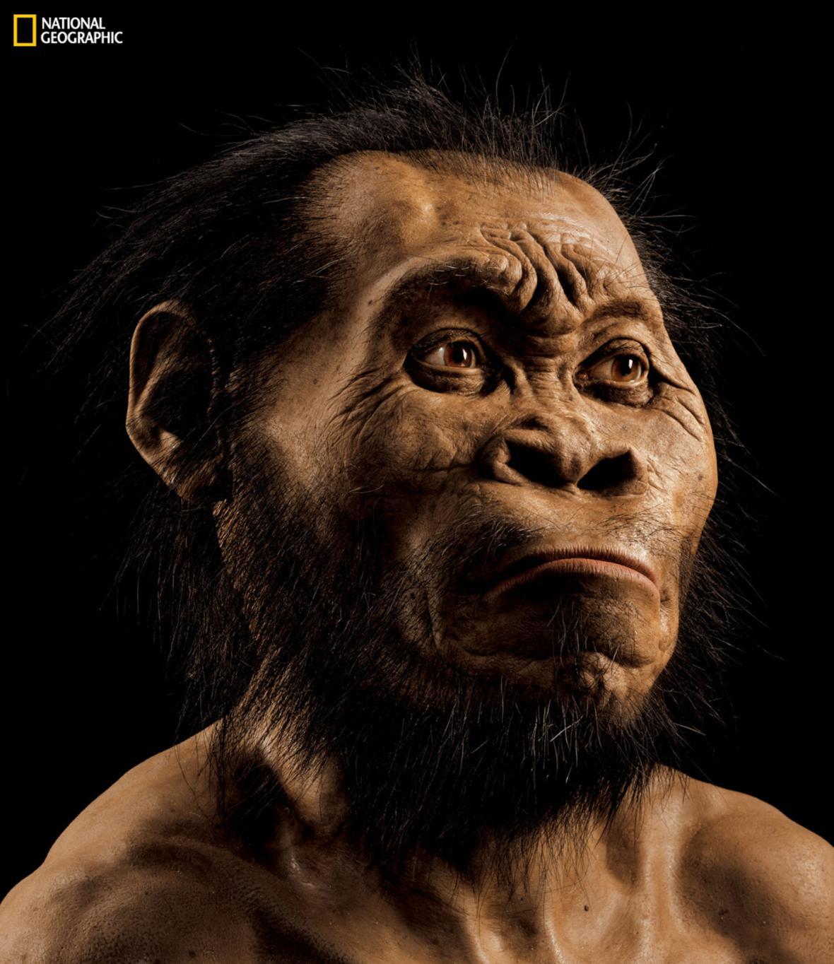 Možná podoba Homo naledi