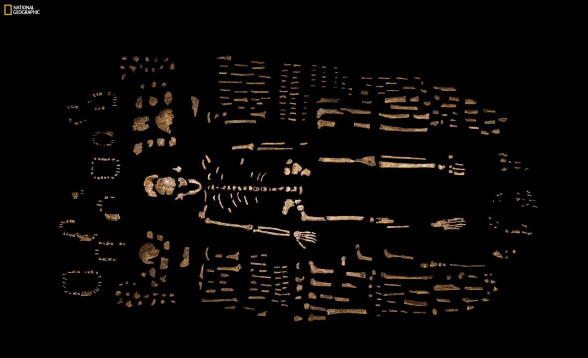 Kosterní pozůstatky - Homo naledi