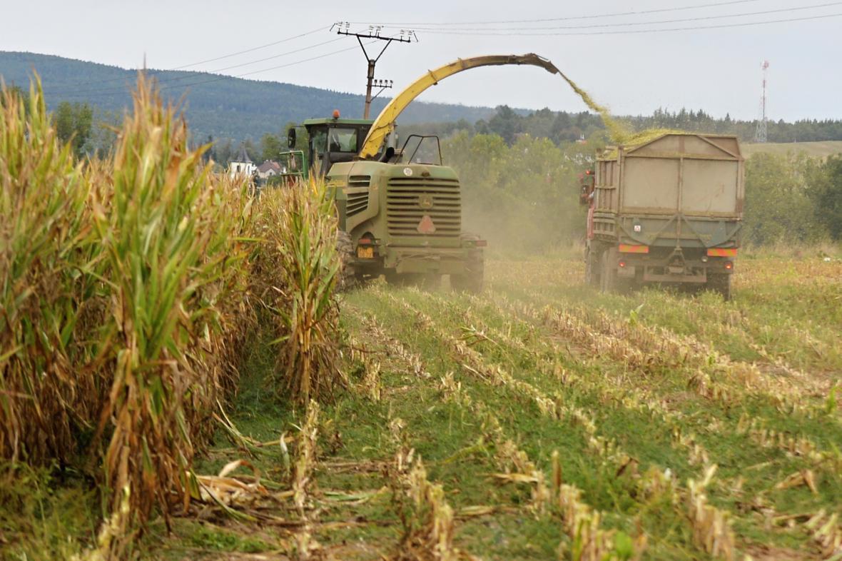 Sklizeň kukuřice v Plzeňském kraji
