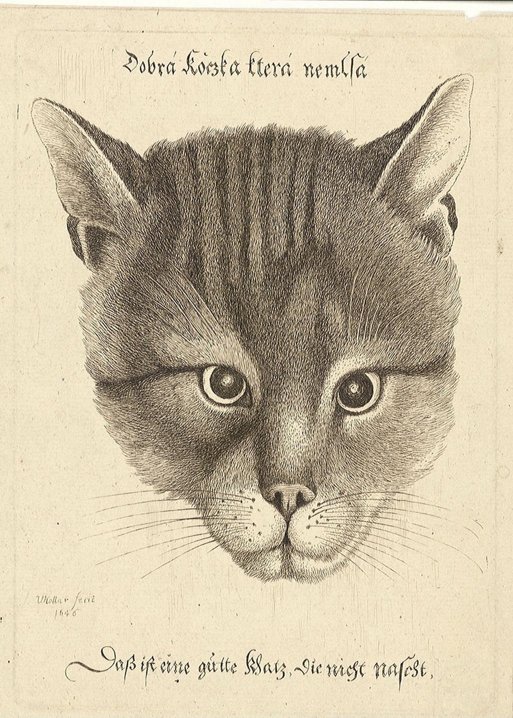 Dobrá kočka, která nemlsá (grafika Václava Hollara)