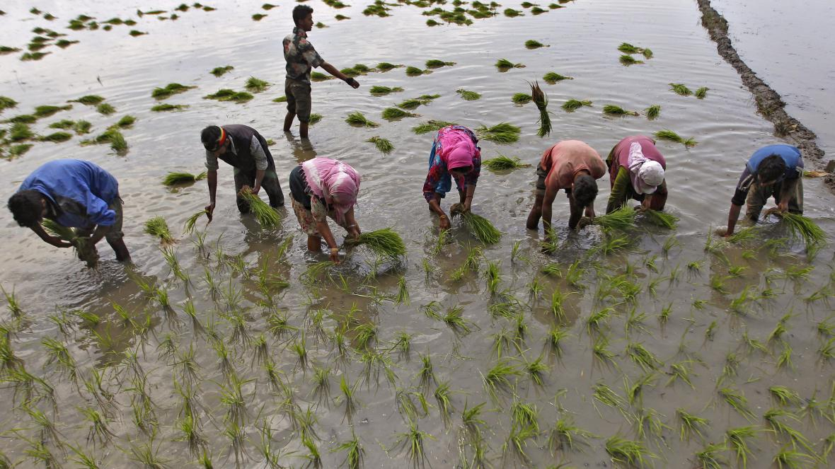 Indická farma s rýžovým polem
