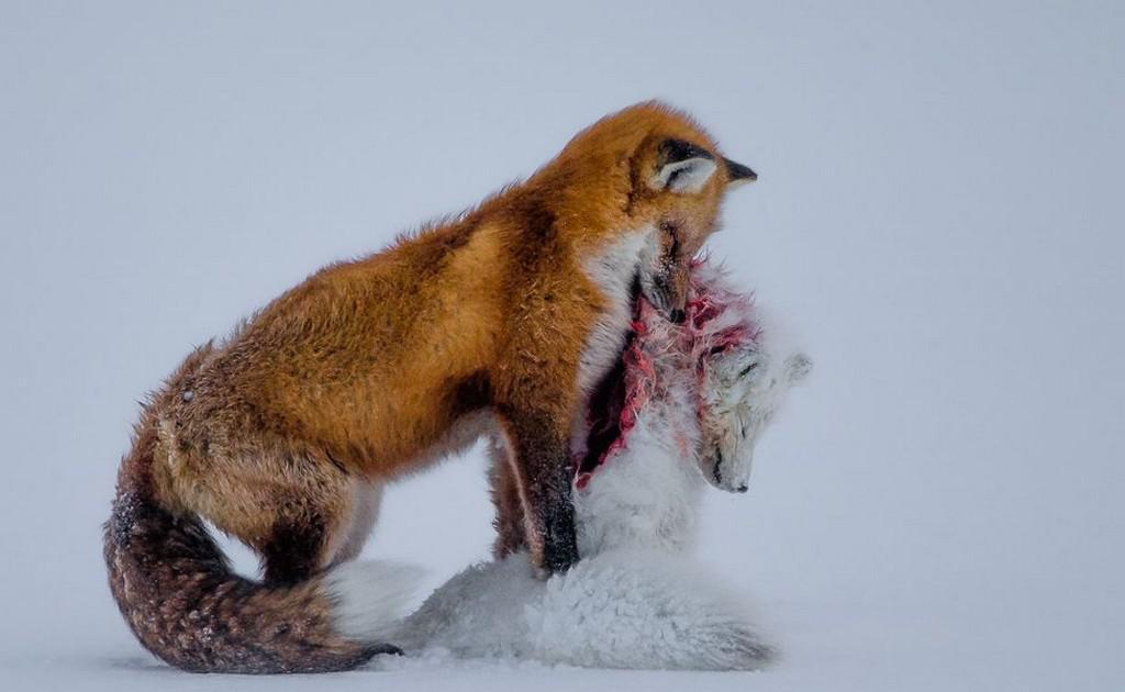 Vítězný snímek soutěže Wildlife Photographer of the Year