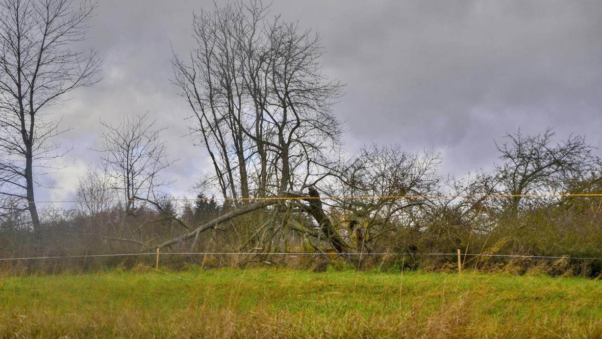 Zlomený strom v krušnohorském Nejdku